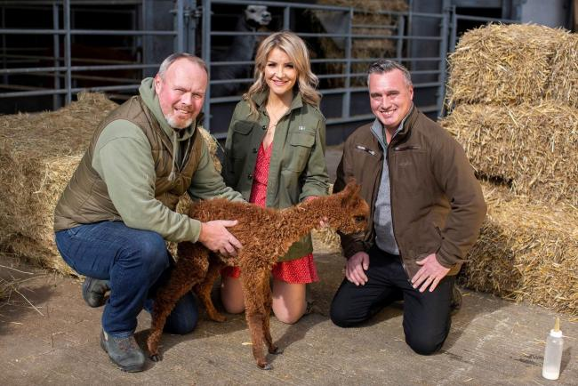 From left, Robert Nicholson, Helen Skelton and David Nicholson with a baby alpaca who features in the sections filmed before the lockdown